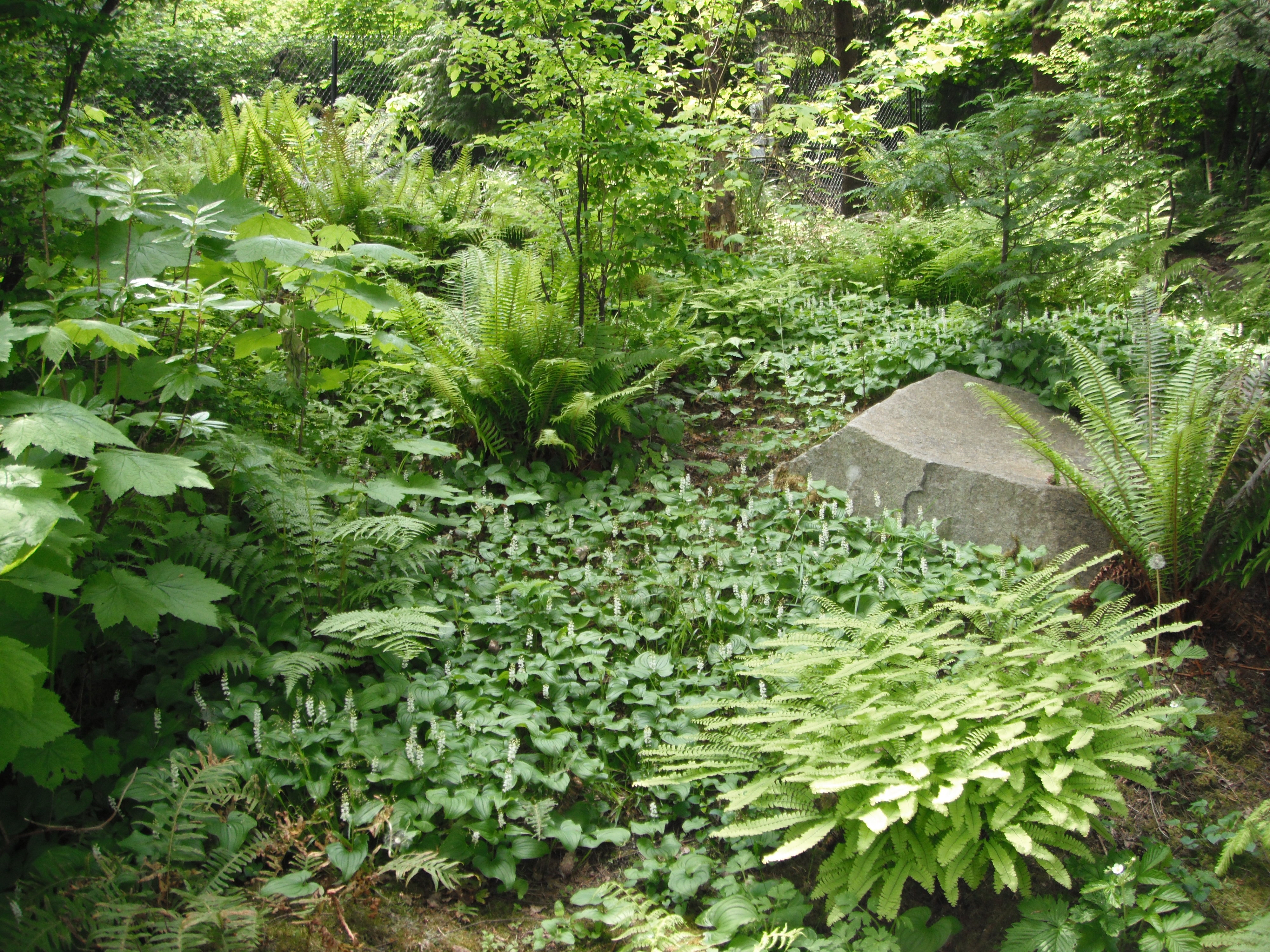 Native Plants Pnw An Encyclopedia Of The Cultural And Natural