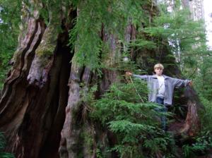 Largest Western Red Cedar