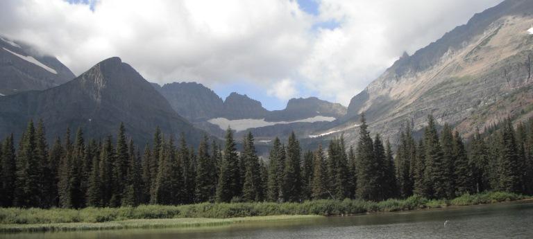 Spruce habitat