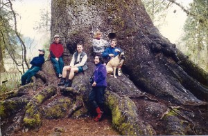 Lake Quinault Sitka Spruce, with the YMCA Camp Seymour Naturalists, Spring 1998