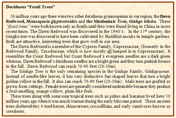 Fossil Trees