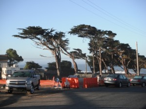 Monterey Cypress sculpted by Ocean winds along the California Coast
