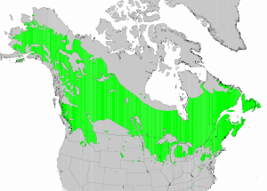 "Distribution of Paper Birch from USGS ( ""Atlas of United States Trees"" by Elbert L. Little, Jr. )"