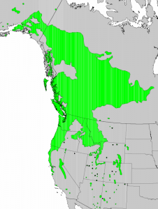 "Distribution of Scoulers Willow from USGS ( ""Atlas of United States Trees"" by Elbert L. Little, Jr. )"