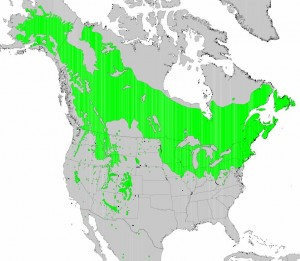 "Distribution of Quaking Aspen from USGS ( ""Atlas of United States Trees"" by Elbert L. Little, Jr. )"