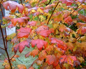 Plants growing in the sun often have redder fall color.
