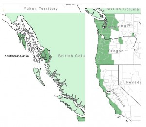 Distribution of Salal from USDA Plants Database