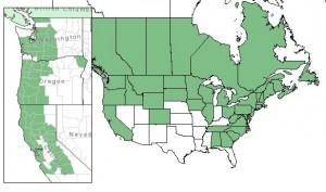 Distribution of Beaked Hazelnut from USDA Plants Database; on the left is the distribution of Western or California Hazelnut.