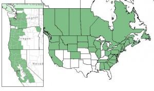 Distribution of Beaked Hazelnut from USDA Plants Database; on the left is the distribution of Western or California Hazelnut.