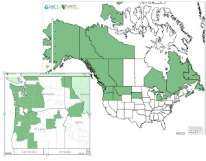Distribution of Oval-leaved Blueberry from USDA Plants Database